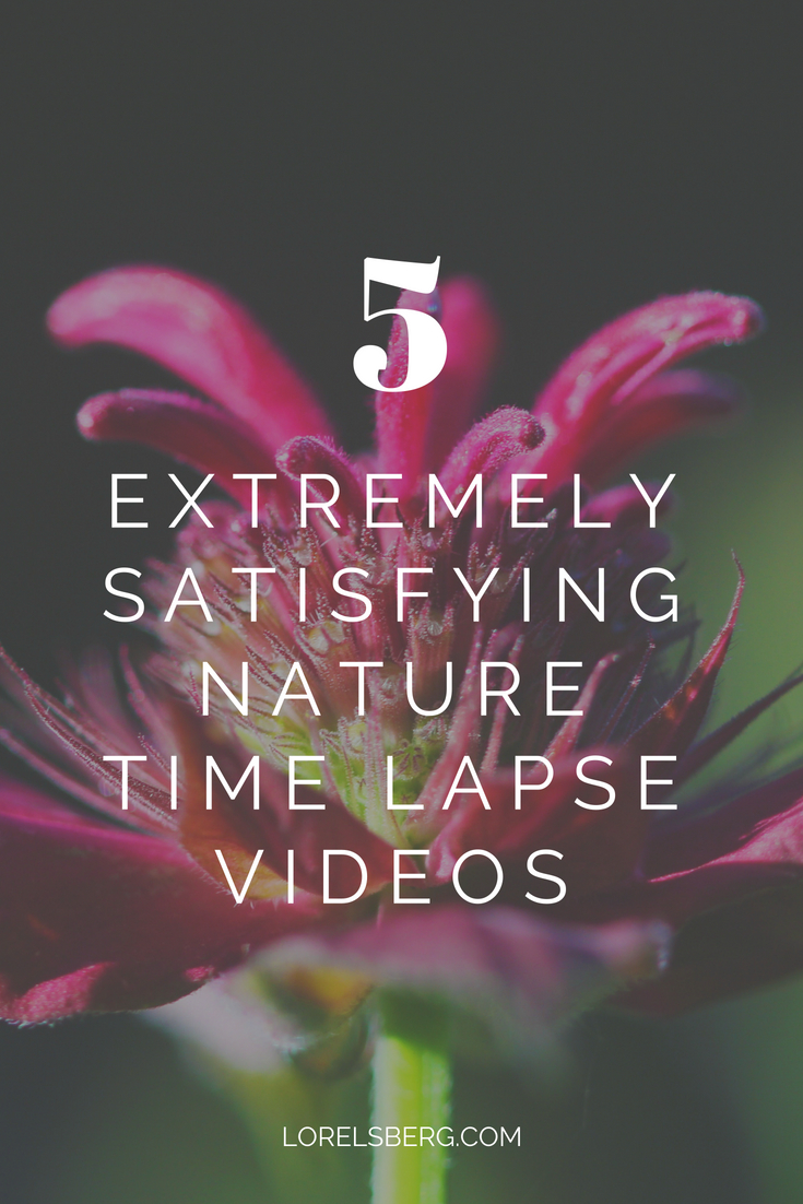 Take a minute, sit back and relax with these satisfying nature time lapse videos. #nature #timelapse