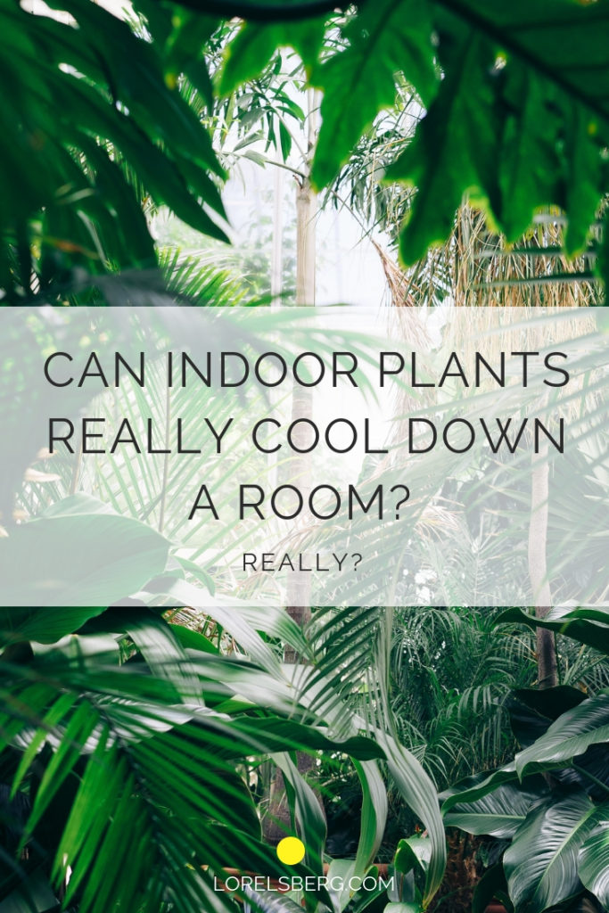 Cover Image - Indoor Plants with title 'Can Indoor Plants really cool down a room'?