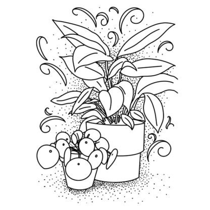 Baby Pilea and Leopard Lily Free Colouring Page